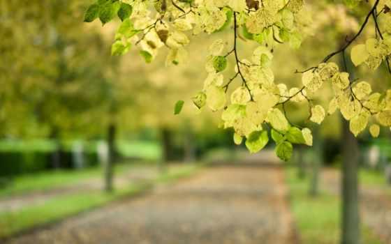 листья, branch, макро