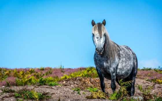 грива, лошадь, лошади