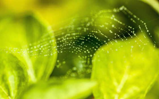 паук, web, ipad