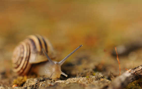 snails, molluscs, snail, animals,