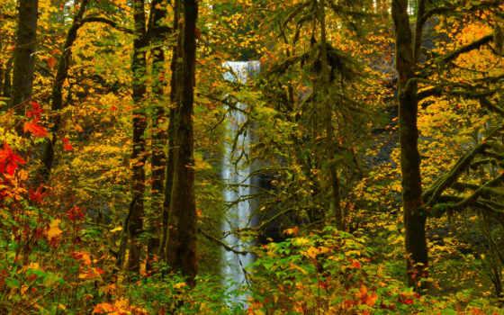 осень, деревя, mais
