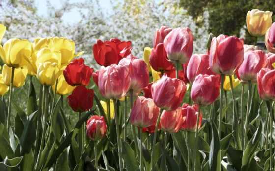 цветы, дек, деревя