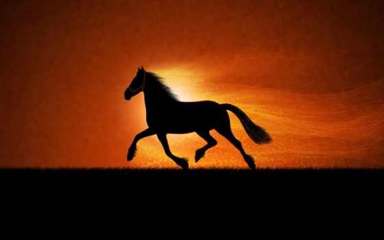 закат, лошадь, лошади