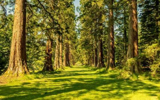 лес, природа, summer, trees, осень,