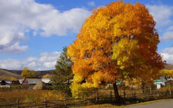 осень, природа, дерево, краски, деревня,