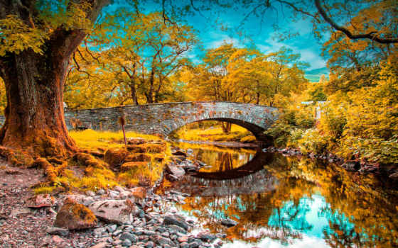 trees, пасть, река