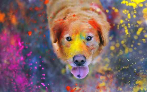holi, красок, праздник, festival, india, многоликая,