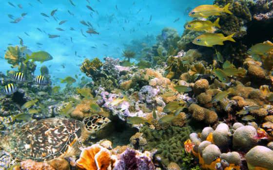 , рыбки черепаха, коралы,