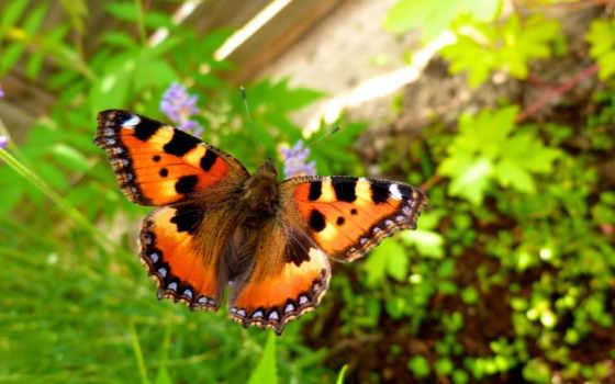 mariposas, para, apk, mariposa, volando, las, бабочка, descargar,