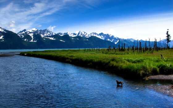 собака, фото, озеро, virtuoart, природа, google, значок, much, объект, ди, модель