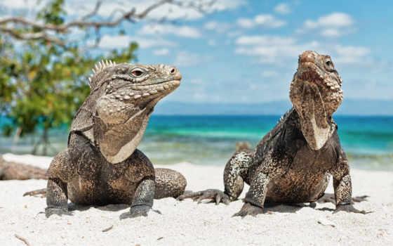 животные, рептилии, пляже