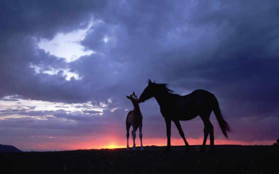 лошади, закат, небо