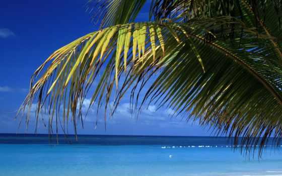 море, пальмы, branch