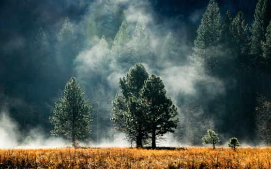 лес, trees, поляна, хвоя, дымка, природа,
