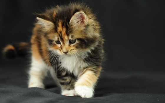 кошки, zhivotnye, животных