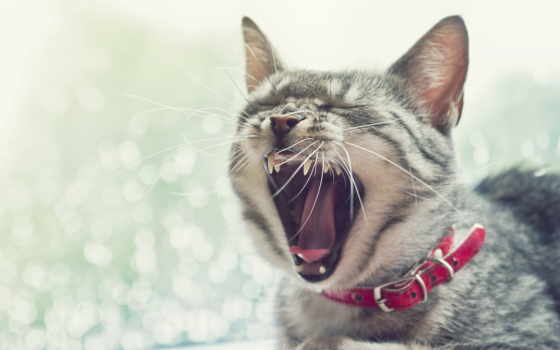 кот, вконтакте, кошек, кота, найти, funny, корм, пахнет,