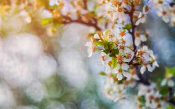 дерево, картинка, češnja, небо, clouds,