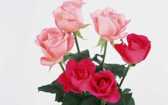 цветы, pink