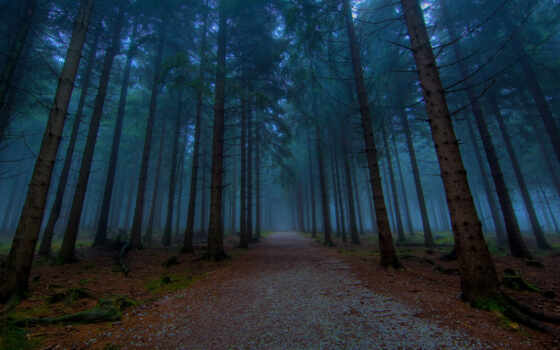 лес, природа