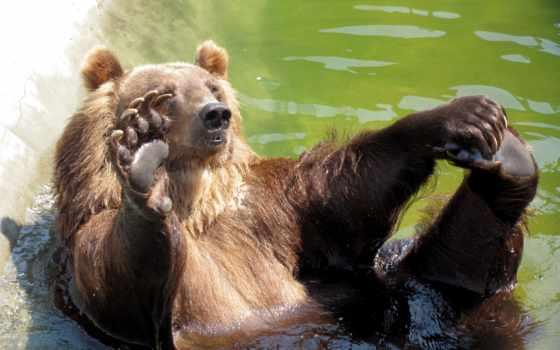 красивые, медведи, nevseoboi