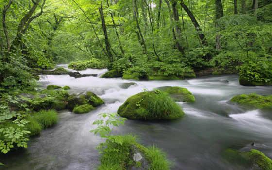 лес, водопады, осень