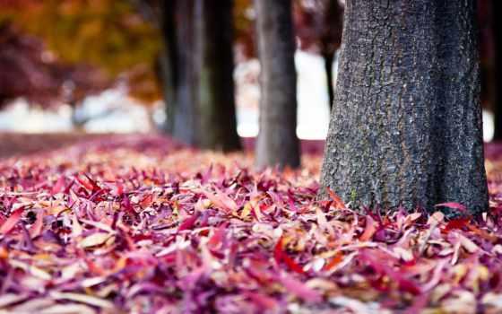 листья, осень, молотый, red, пасть, макро, природа, поле,