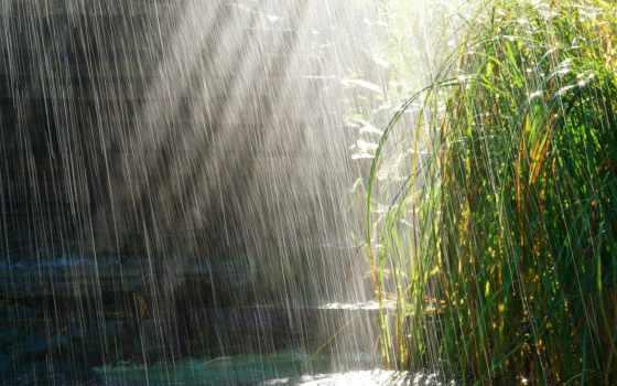 трава, sun, дождь