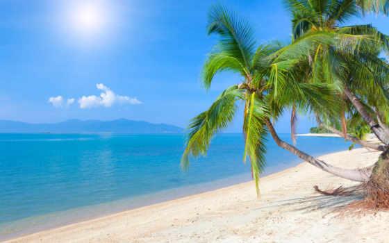 пляж, море, palm, песок, небо, метки, пальмы, tropical, закат, water, ocean,
