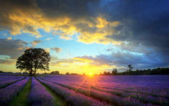 lavender, stock, stunning, закат, photos, landscape, images, поле, royalty,