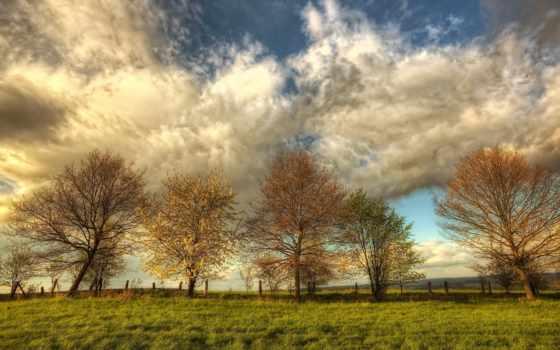 весна, природа, поле, oblaka, trees, весной, красивые, небо, высоком, качестве, everything,