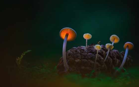 dunes, близко, dark, den, helder, mushrooms, нидерланды, bing, united, даниэль, country,