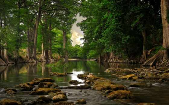 деревья, река