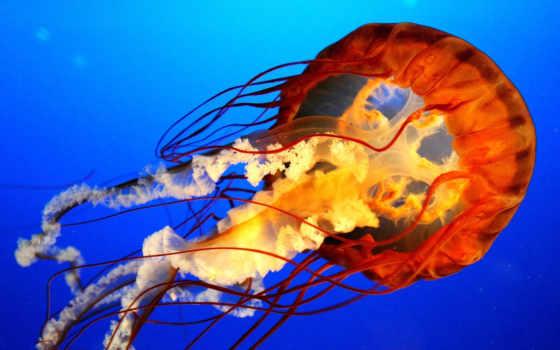 медуза и голубая вода