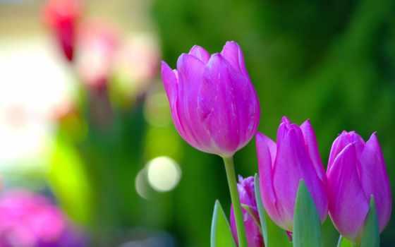 flowers, wide, лес, just, творчества, яndex, free, pariacoto, водопад,