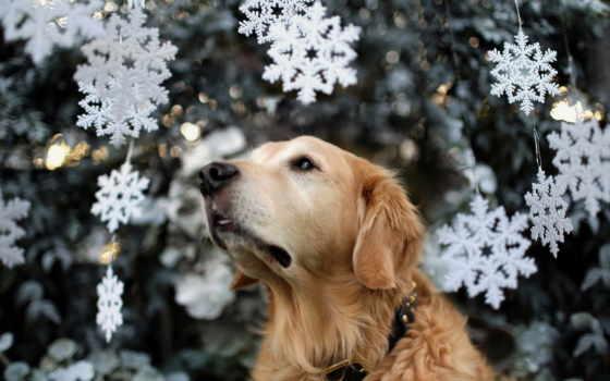 собака, christmas, дерево, праздник, dogs, снег, animal,