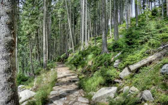 лес, леса, чехия, horni, чехии, природа, пейзажи -, mise, trail, trees, трава,