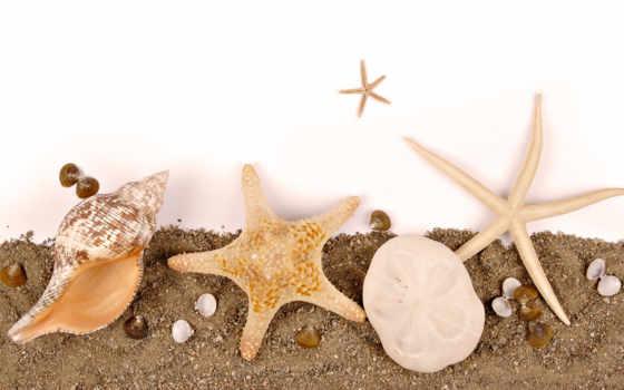 star, морская, ракушек, морских, png,