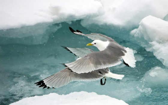 птица, free, birds, seagull, птицы, skies,