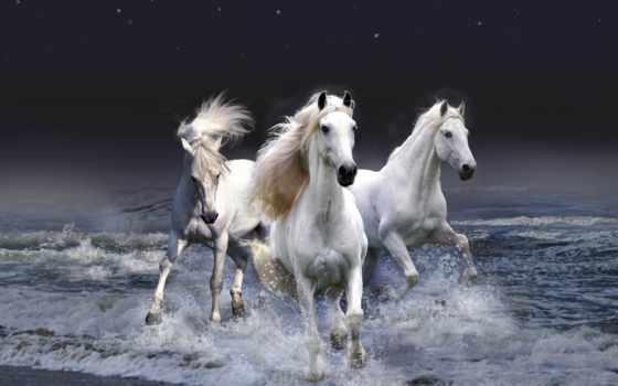 кони, лошади, мастей, всех, лошадки, грациозные, красивые, бесконечно, zhivotnye,