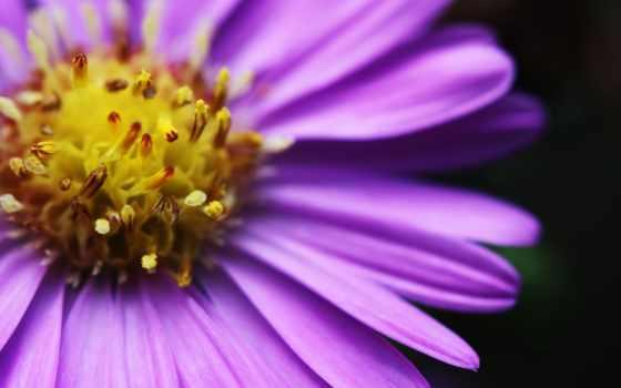 cvety, яркий, цветочек