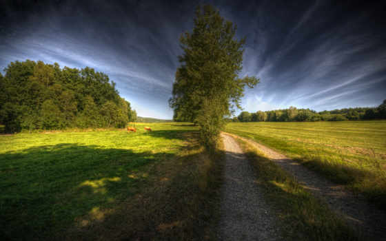 природа, cow, дорога, дерево, путь, heaven, категория, magnificent