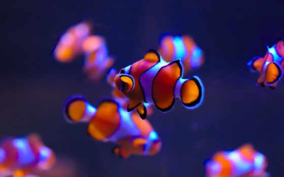 fish, море, underwater, клоун, world, аквариум, animal, pisces, red