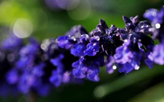 macro, flora