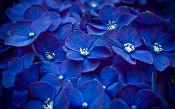 цветы, макро Фон № 32979 разрешение 1920x1080
