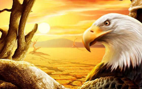 орел, белоголовый, орлан, сша, нарисованный,