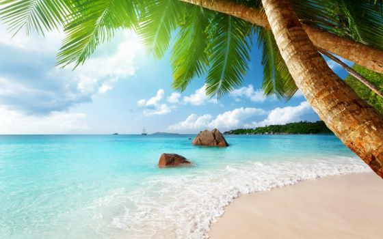 пляж, море, ocean, sun, песок, пальмы, фотообои, берег, tropics,