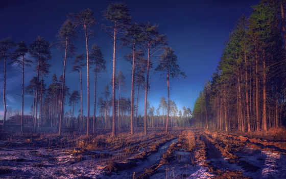 trees, russian, природа, pin, лес, pictures, pinterest, desktop,