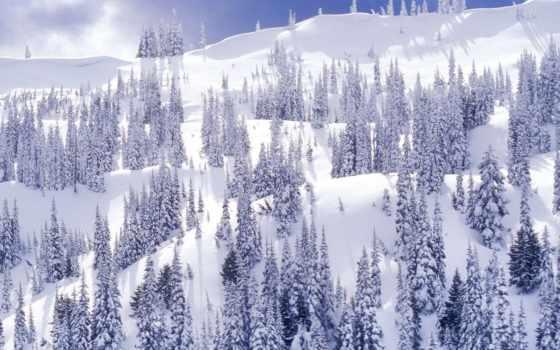 коллекция, снег, winter, user, лес, смотреть, гора