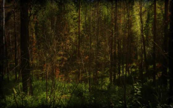 лес, deep, страница, top, full, this, presented,