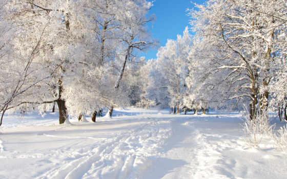 winter, лес, снег, природа, trail, снежная, click, one, ёль, branch,